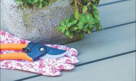 Pre-winter perennial pruning pointers