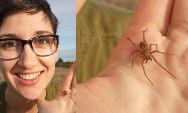 Secret Lives of Spiders with Catherine Scott