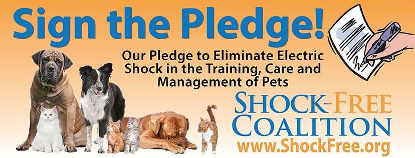 Shock Collar Pledge (2)_edited