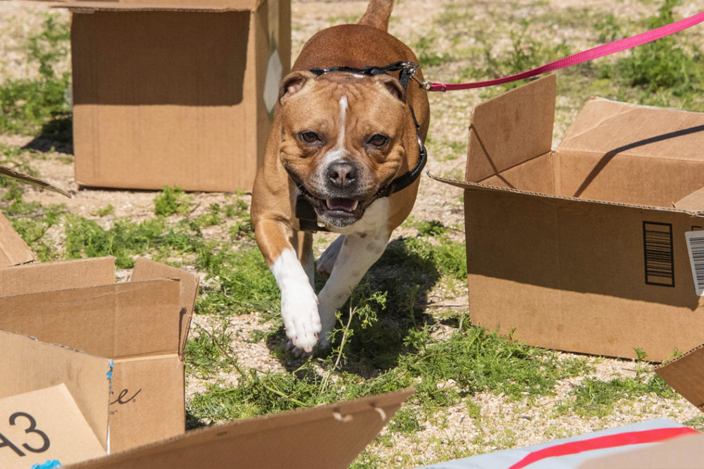 Cheeky Dog Obedience Dog Training Barn Hunt AKC Good Citizen Positive Reinforcement In Home Puppy Classes 85331