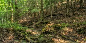 Bruce Trail Bibbulmun Track Friendship Trail