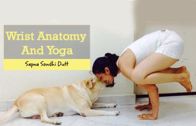 Wrist Anatomy And Yoga