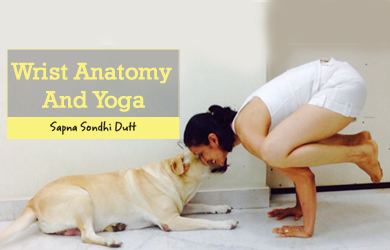Wrist Anatomy And Yoga