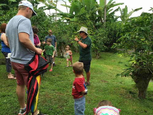 Greenwell Coffee Farm tour.. learning all about coffee beans, from harvest to roast!