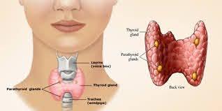 Thyroid verdict