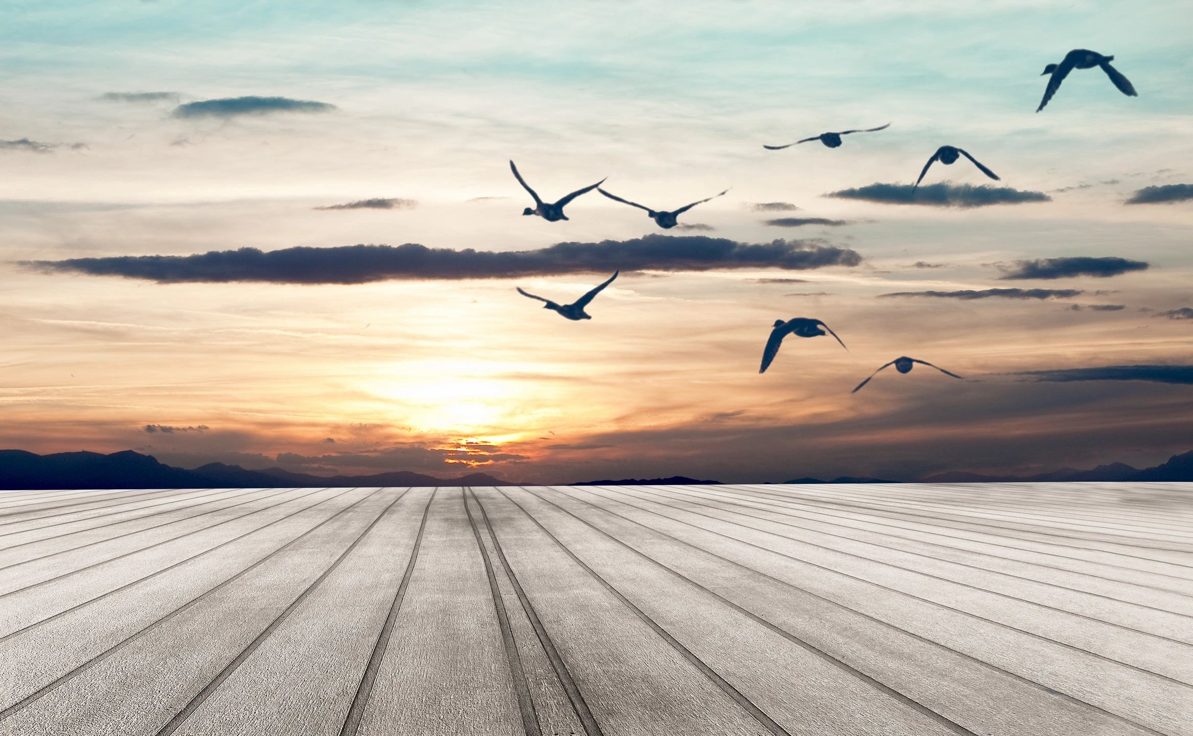Seagulls flying into sunset deeper thoughts about life