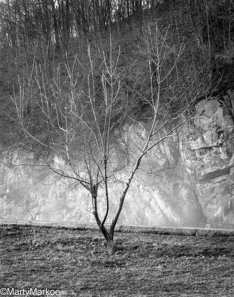 Bare-Tree-Croton-Dam