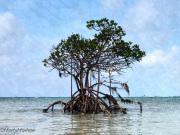 Tree-in-water-Bahamas