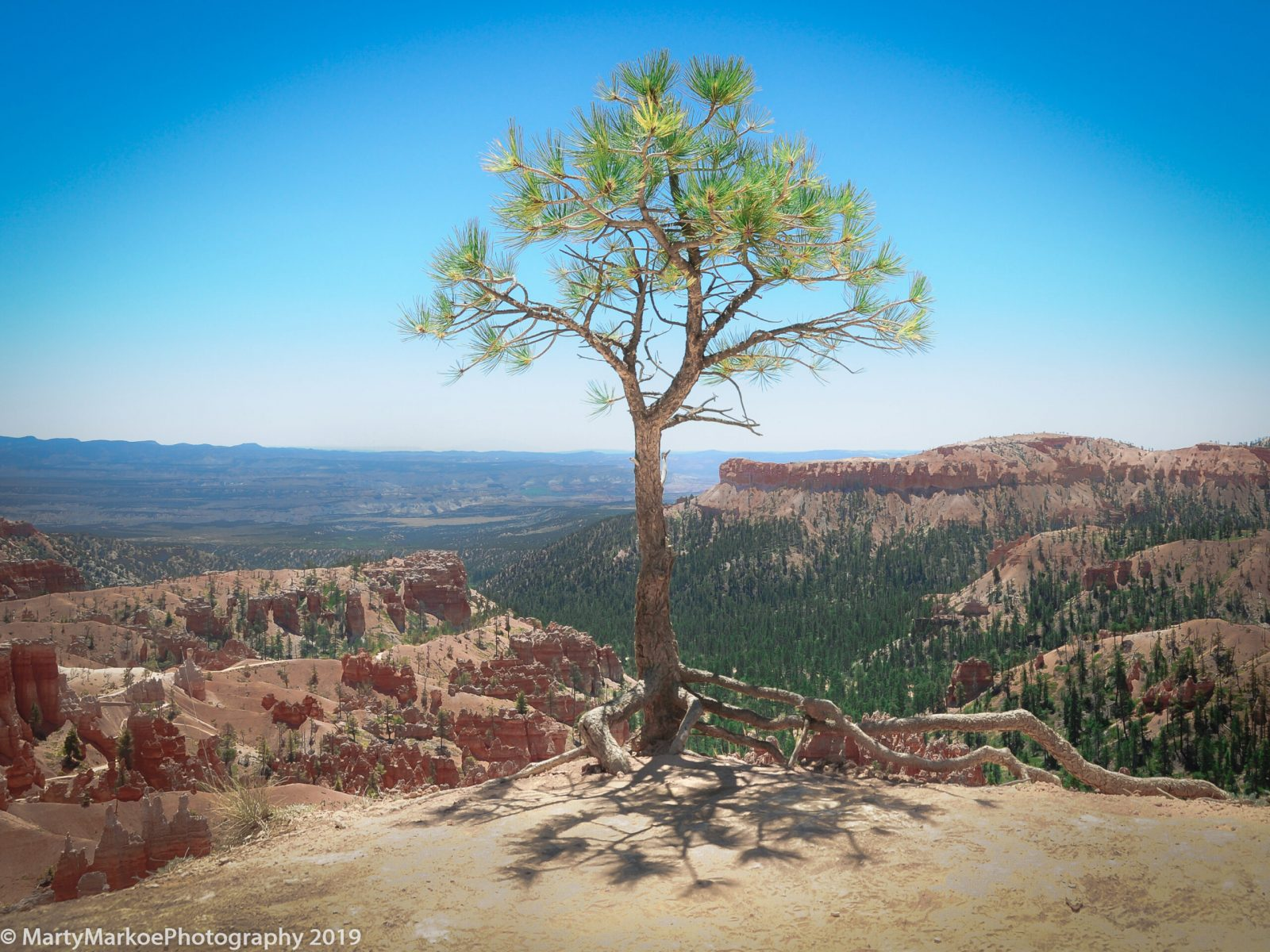 Lone-Pine