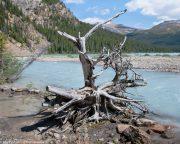 Bow-Glacier-Lake
