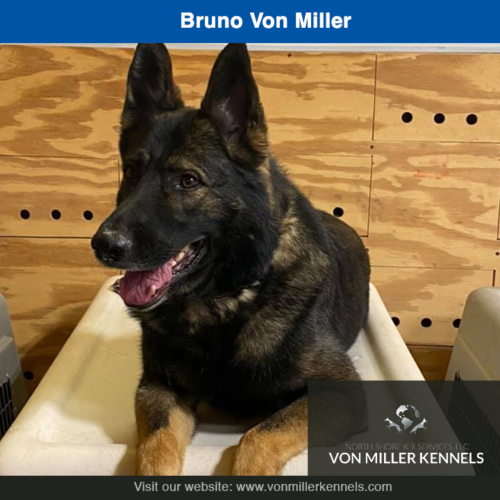 Bruno Von Miller, just hanging out as usual !!!