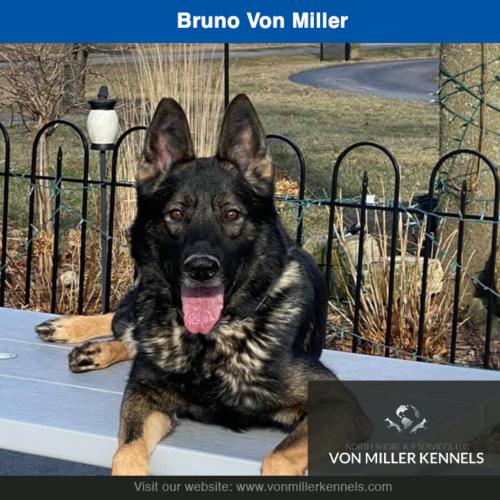 Bruno Von Miller