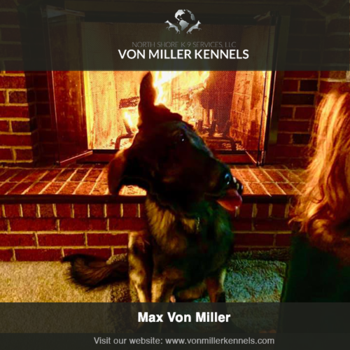VMKfire-conmillerkennels-dog-insta