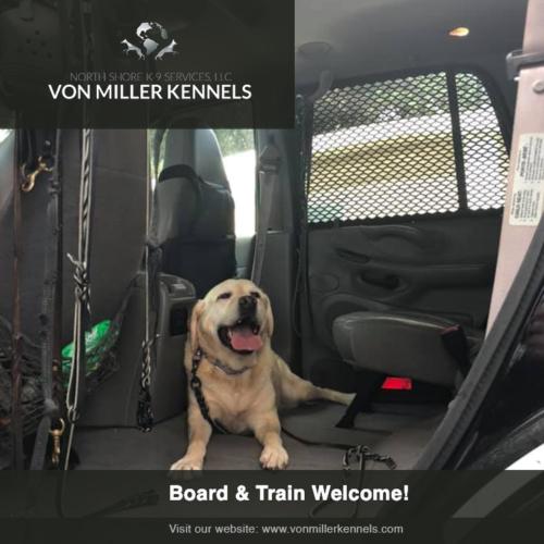 jake-board-trainwelcome-vonmillerkennels