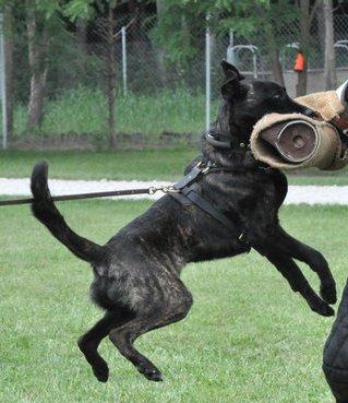 training-dogsthumb