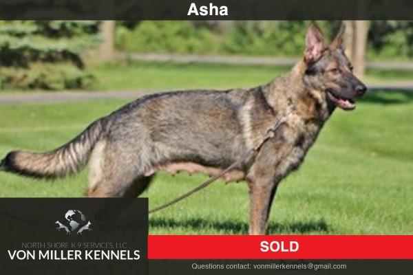 VonMillerKennels_Asha-Sold