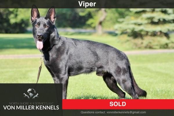 VonMillerKennels_Viper-Sold