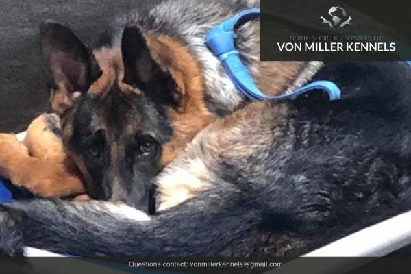 VonMillerKennels_Training-Boarding-2