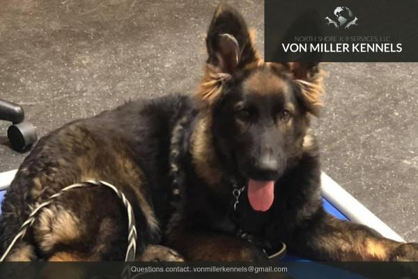 VonMillerKennels_Training-Boarding-3