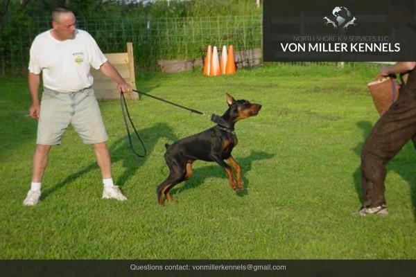 VonMillerKennels_Training-Boarding-5