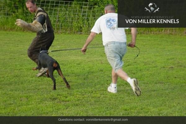 VonMillerKennels_Training-Boarding-6