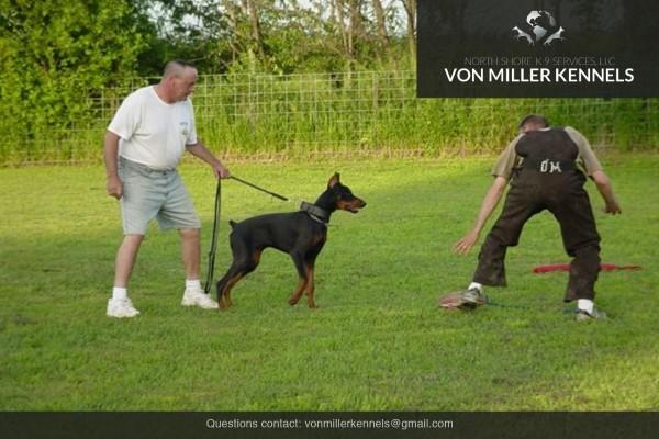 VonMillerKennels_Training-Boarding-7