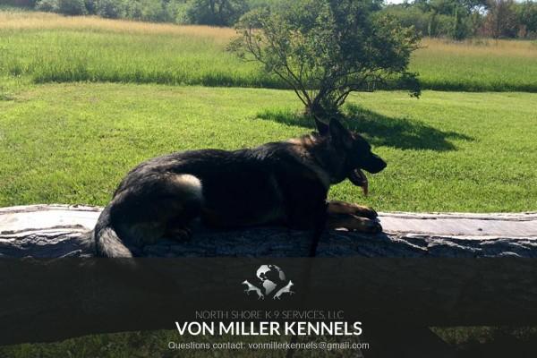 VonMillerKennels_training1