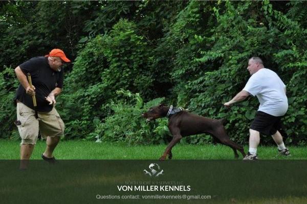 VonMillerKennels_training10