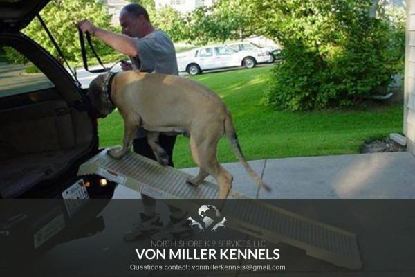 VonMillerKennels_training12