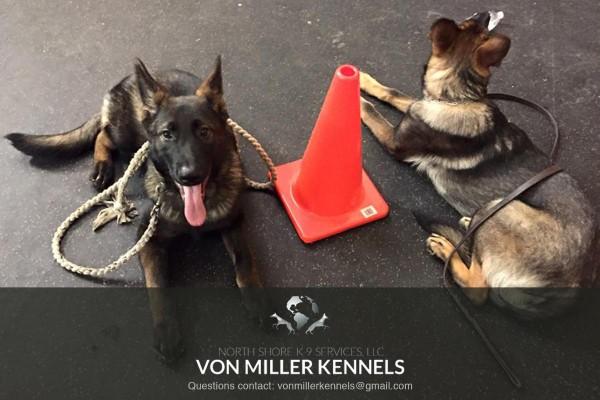 VonMillerKennels_training13