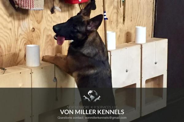 VonMillerKennels_training2