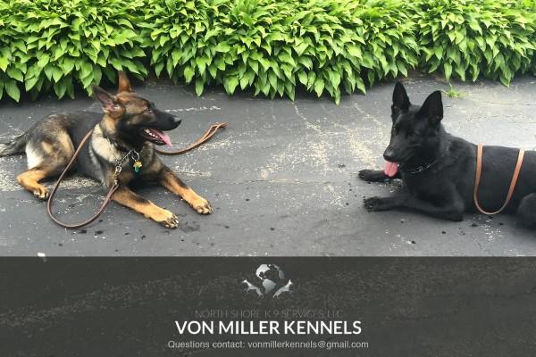 VonMillerKennels_training3