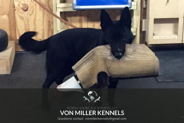 VonMillerKennels_training4