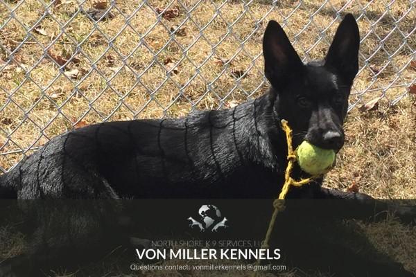 VonMillerKennels_training5