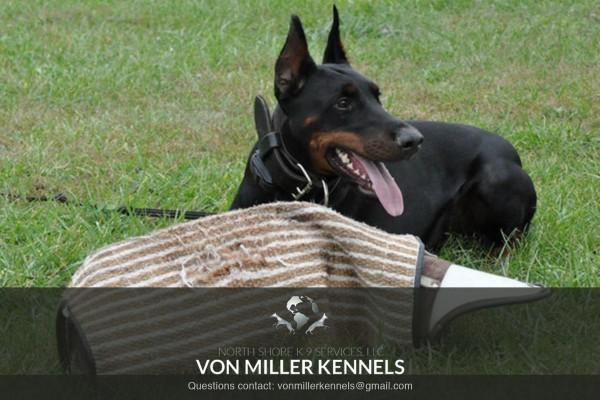 VonMillerKennels_training7