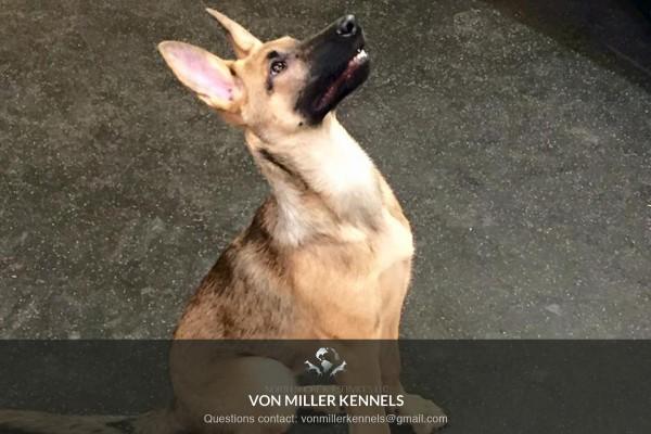 VonMillerKennels_training9