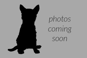 photos-coming-soon-thumb