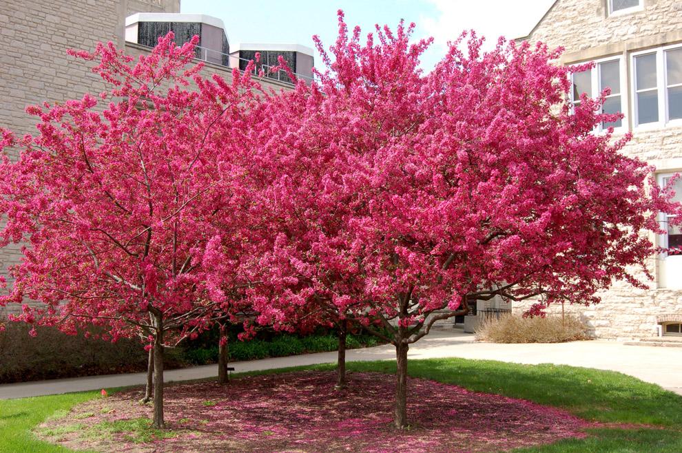 Tree Care Programs