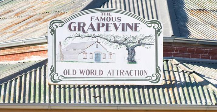 The Chiltern Grapevine