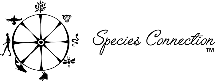 Jacquelin Smith Species Connection