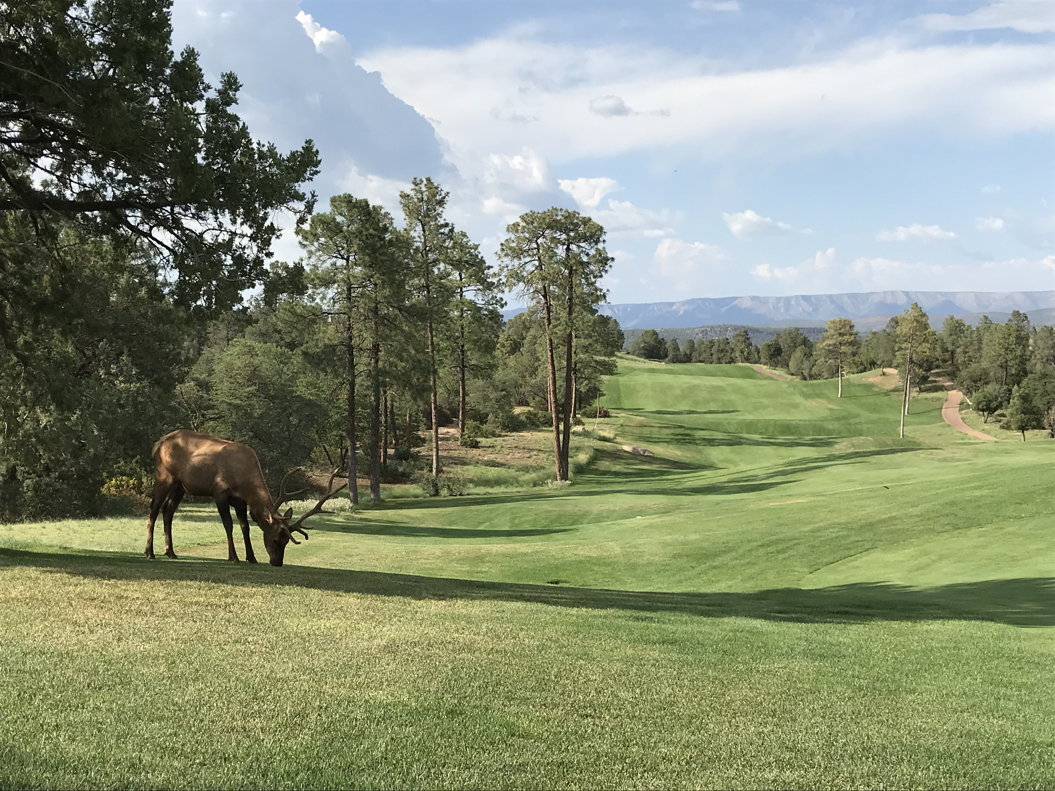 Chaparral Pines Available Homesites
