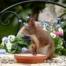 Squirrels Home Damage