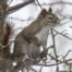 Squirrel Entry Prevention Service