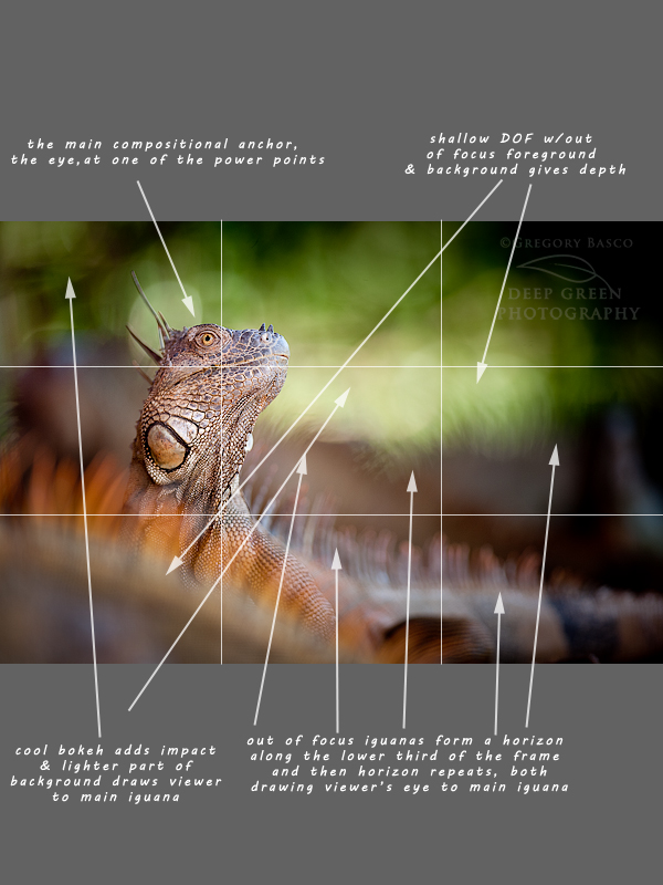Lizard Photography