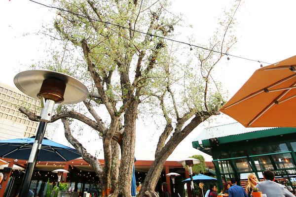 Aqualoop Eataly Ecovie Water management Olive Tree