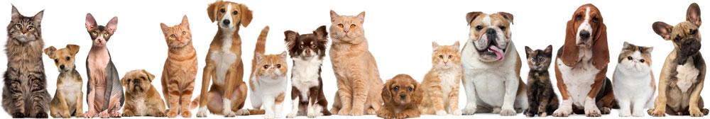 Happy Tails Veterinary Clinic