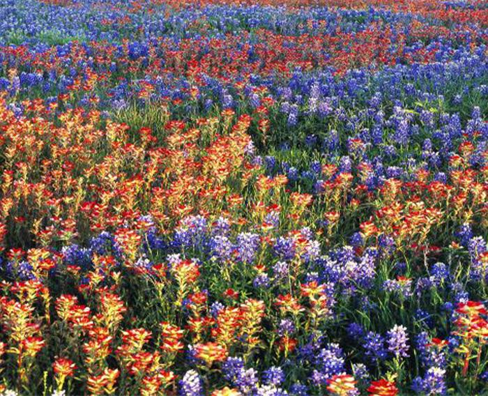 Texas Estate Planning