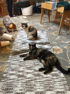 Koko and Mimi found the new rug right away, and appear to approve