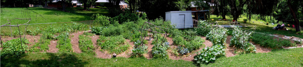 transform your lawn into a beautify voundy of food and flowers