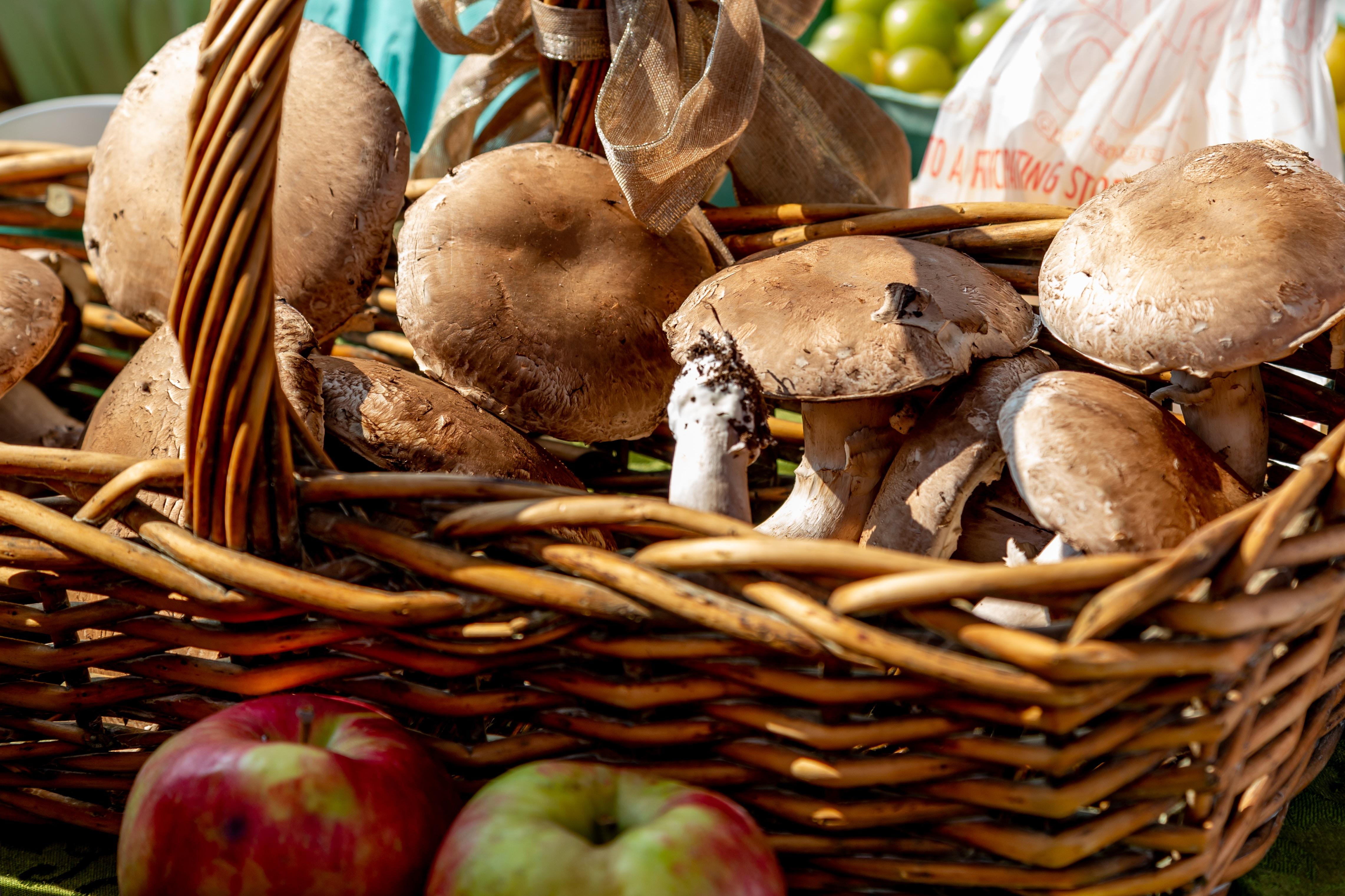 grow mushrooms at home